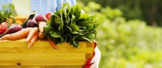 Разные овощи в руках