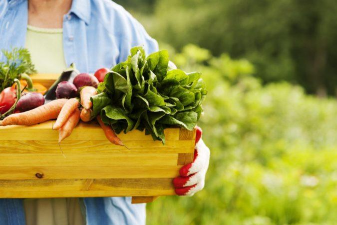 Соседство овощей в огороде с томатами