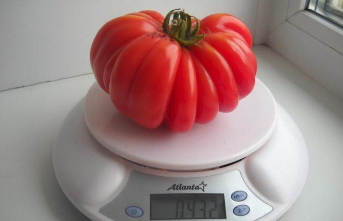 Большой помидор на весах