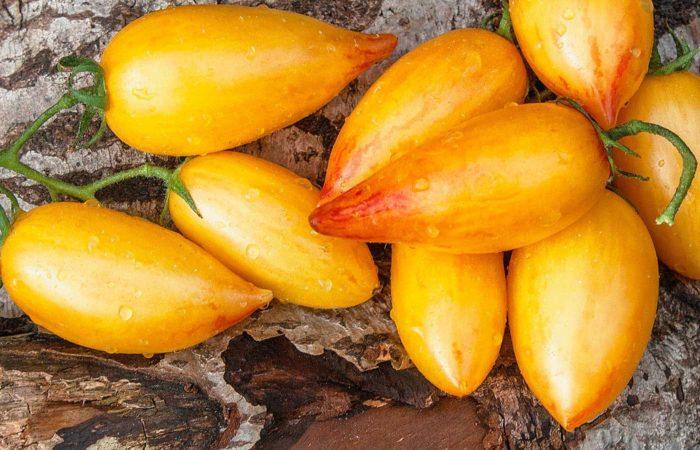 Несколько томатов сорта Банановые ноги