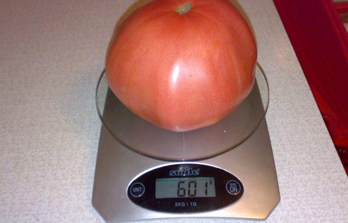 Один томат на весах