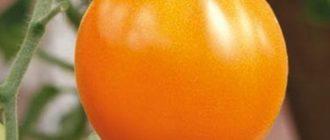 Один томат Золотое сердце