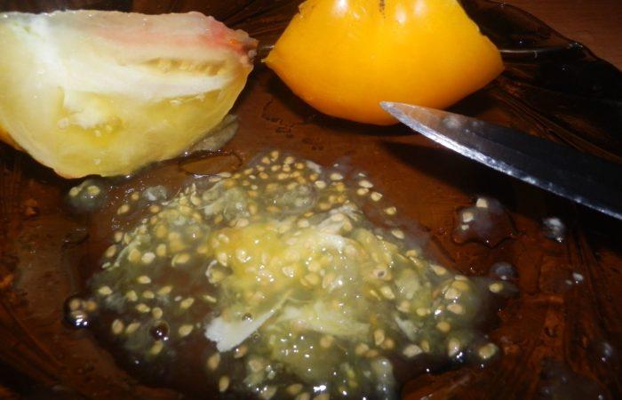 Семена с желтых томатов