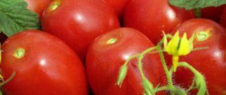Несколько помидоров сорта Кенигсберг