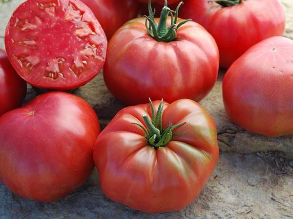 Несколько томатов Сахарный пудовичок