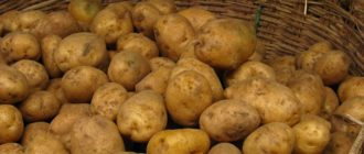 Картофель в корзине