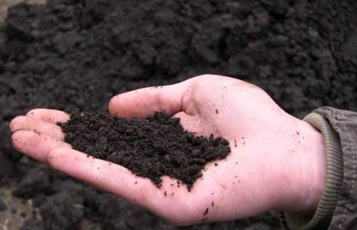 Почва торфяная в руке