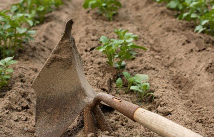 Вскапывание грядок лопатой