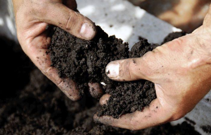 Грунтовя почва