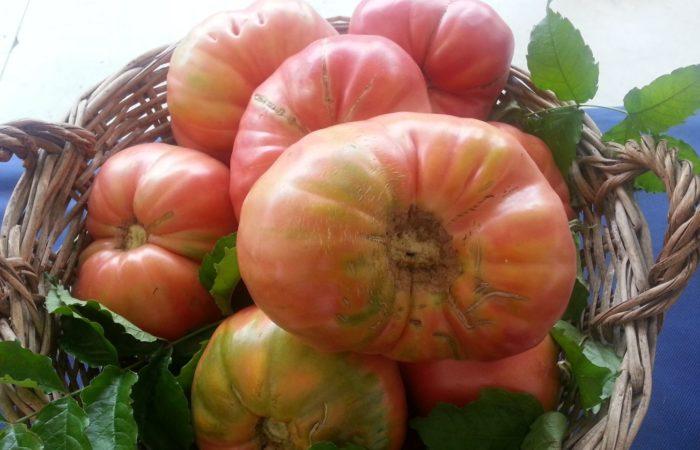 Крупные сладкие помидоры