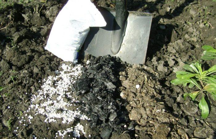 Вскапывание почвы с подкормкой