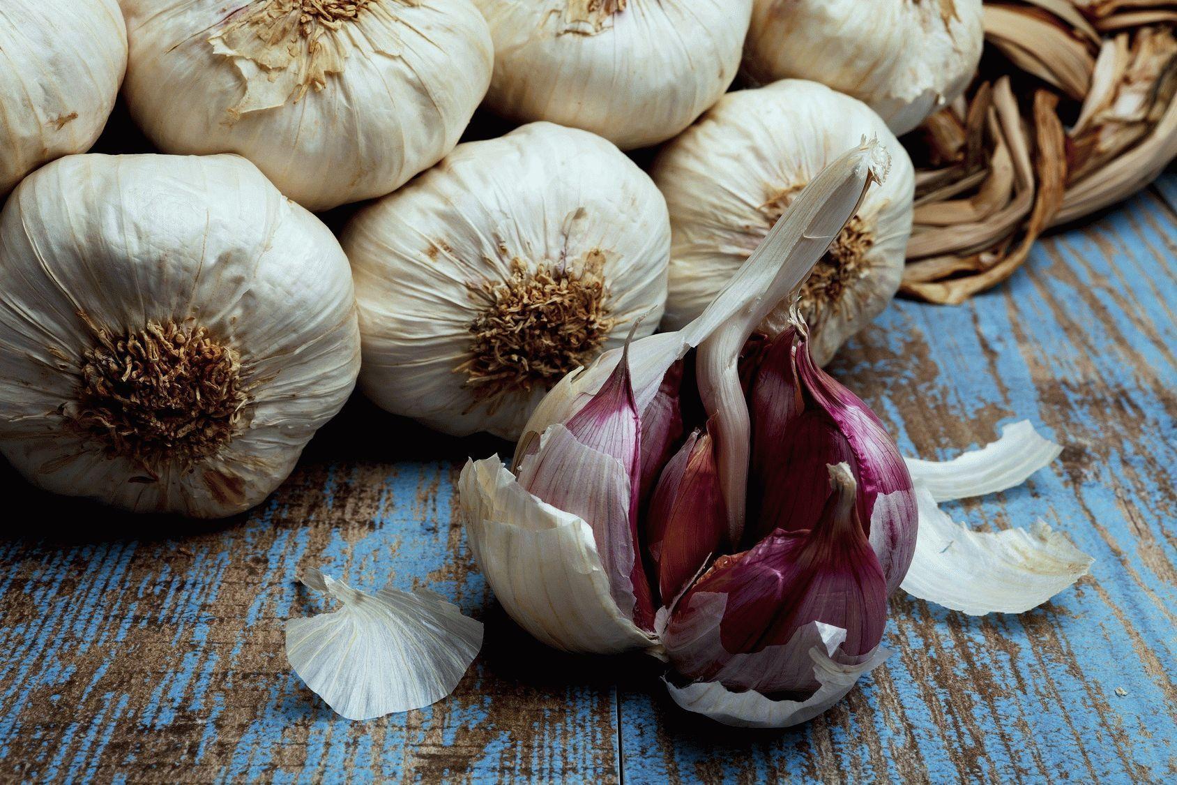 Лучшие урожайные сорта озимого и ярового чеснока