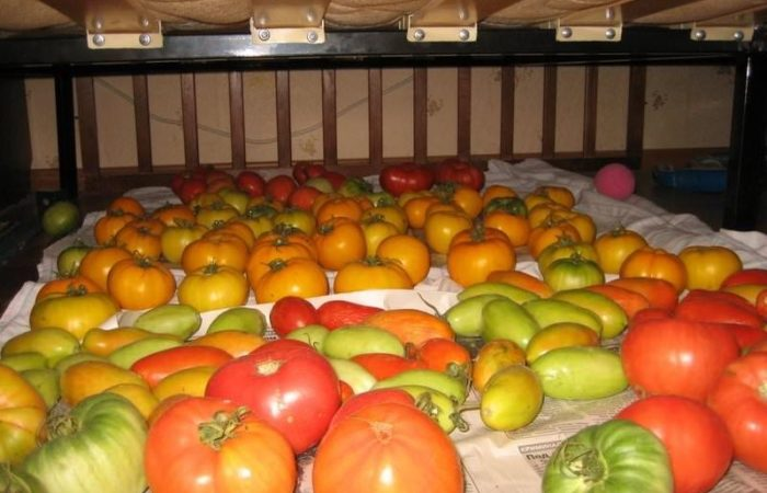 Зеленые и дозревшие красны помидоры на газете