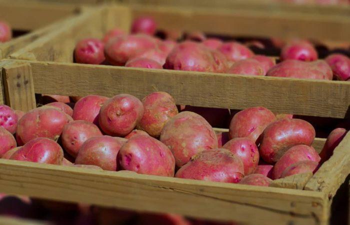 Розовый картофель в ящике