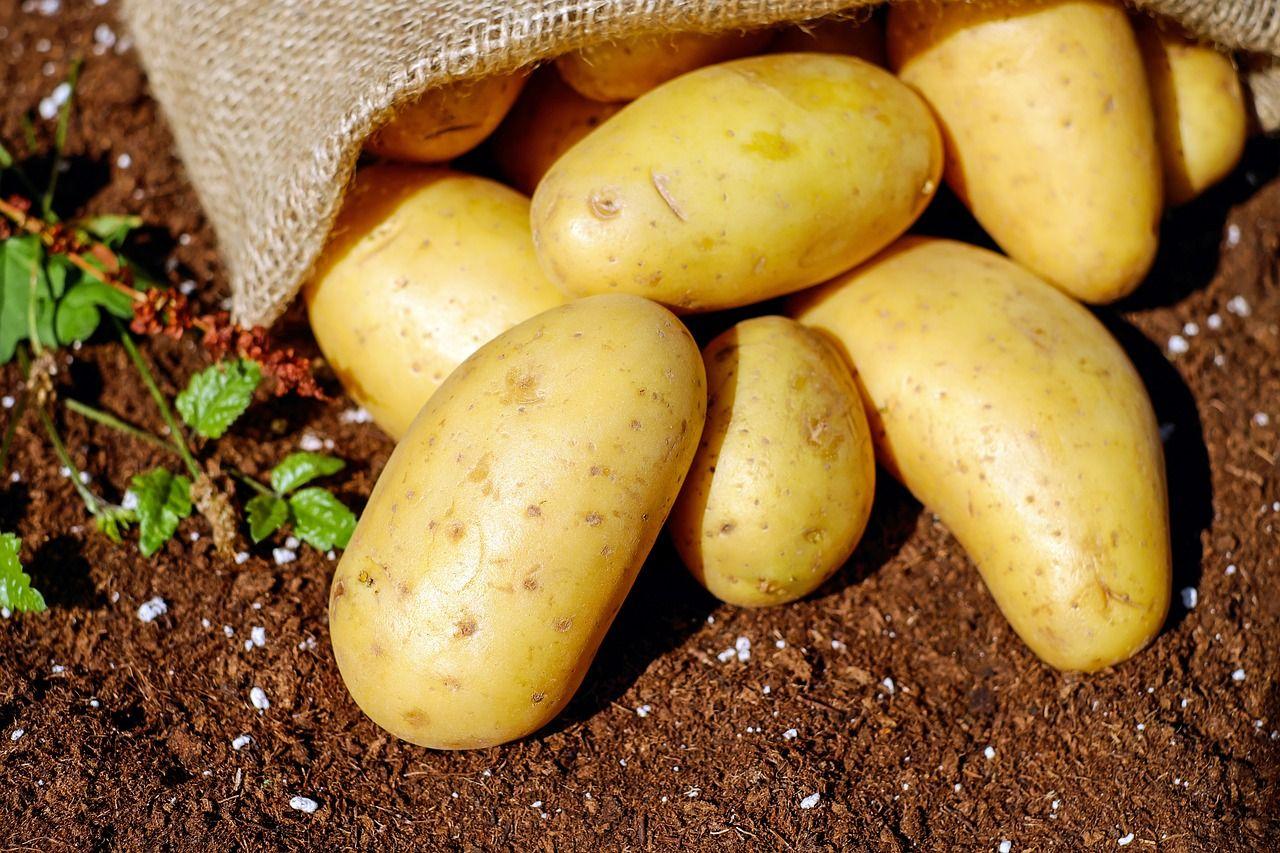 При какой температуре картофель становится сладкий