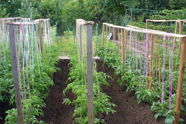 Щпалеры для томатных кустов