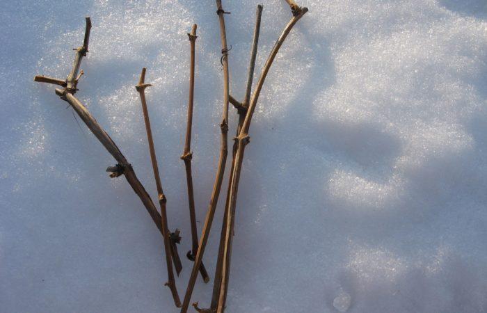 Чубуки на снегу