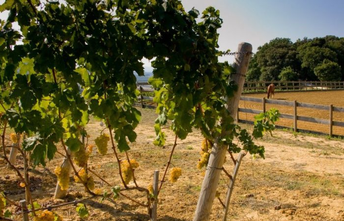 Виноград в осенний период