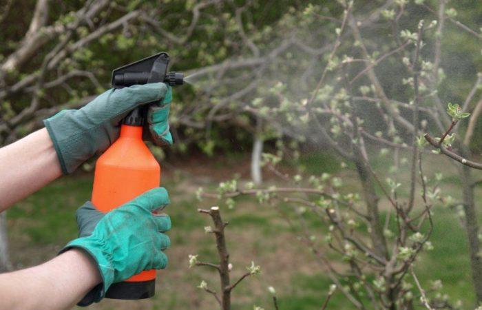 Опрыскивание виноградной лозы из пульверизатора