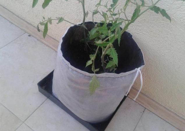 Один мешок с томатной рассадой