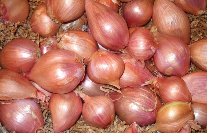 Луковицы шалота