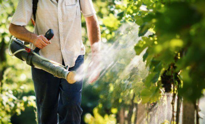 Процесс опрыскивания винограда