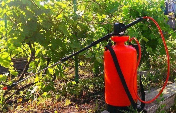 Опрыскиватель рядом с лозой винограда