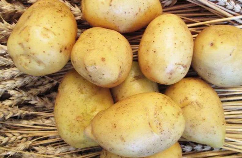 Сорт картофеля Гала: характеристики и особенности выращивания